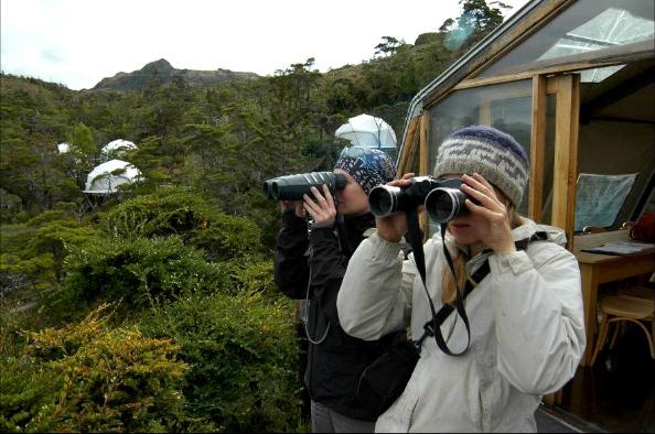 Observation des baleines à partir du campement