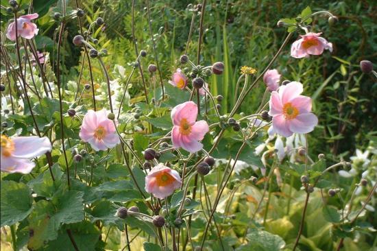 Design jardin champetre rustique 3122 jardin botanique papillon jardin potager en palette - Jardin anglais neuchatel dijon ...