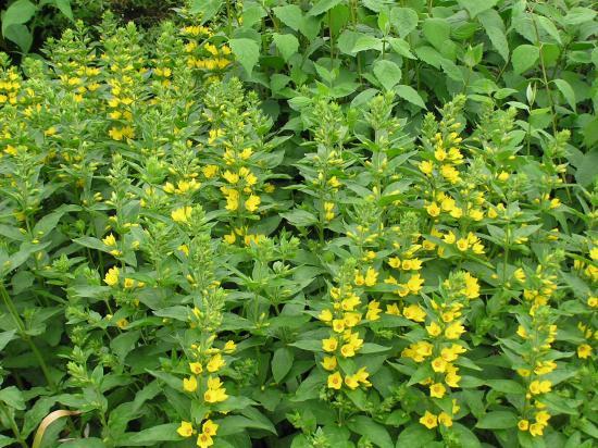 Plantes fleurs jaunes vivaces plante grasse a fleur orange | Maison ...